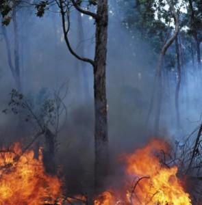 Bushfire!