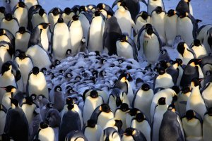 We tend to huddle into like-minded groups . . . a bit like penguins do