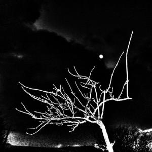 Long dark nights